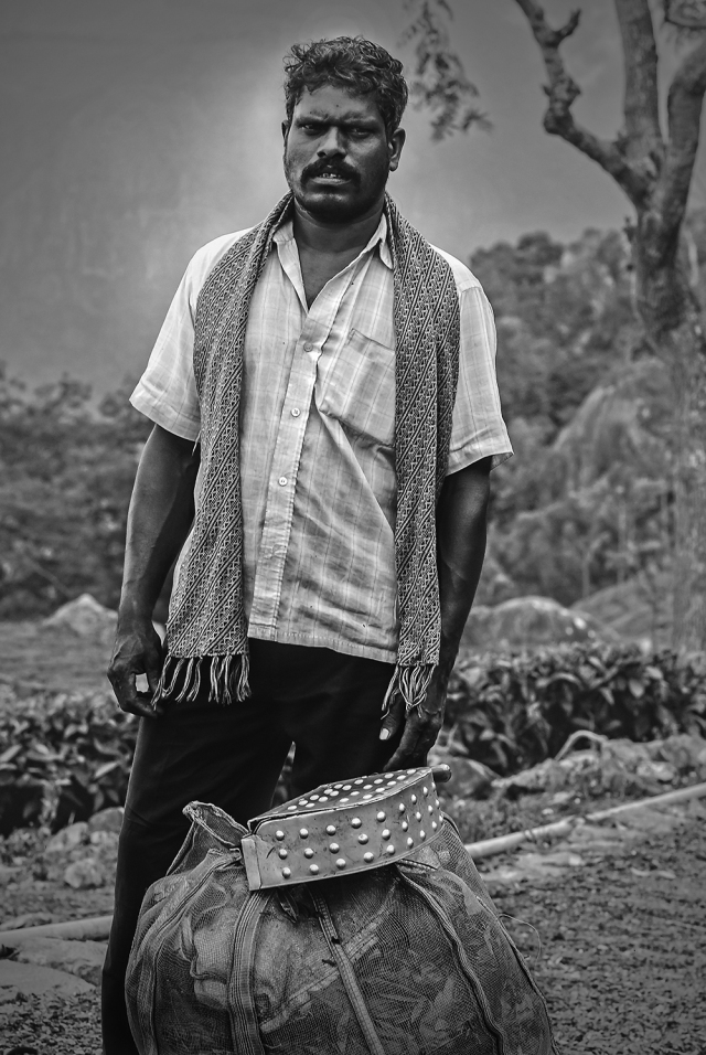 Tea garden labourer