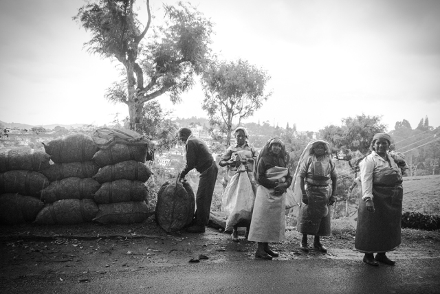 Tea pickers of Connoor