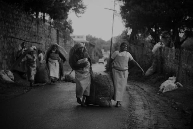 The tea garden workers
