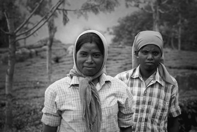 The tea pickers of Connoor