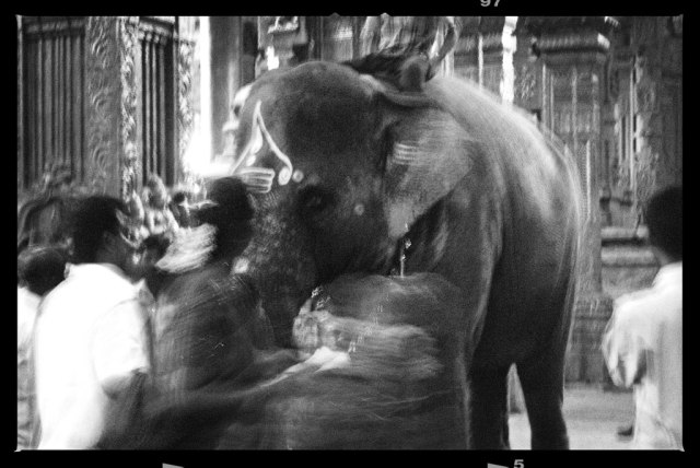 The sacred elephant inside the temple chooses to bless a few visitors by lifting its trunk over the visitors head. I was lucky to be chosen, an experience of a lifetime.