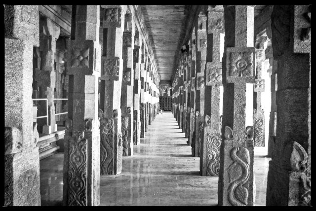 The temple also contains a 1,000 pillared hall, temple art museum, holy golden lotus tank, musical pillars, stalls, and many smaller shrines. This is the pillar hall where every pillar is in a straight line no matter where you stand in the hall. Quite a feat in Geometry to think of the minds that designed it 3500 years ago.