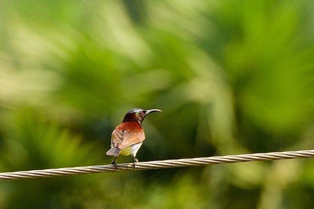 Kondakarla Bird